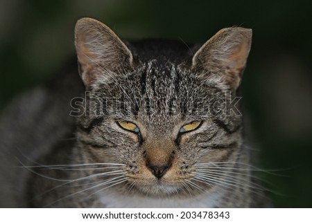 Close-Up Portrait of a Sleeping Domestic Feral Cat. - stock photo