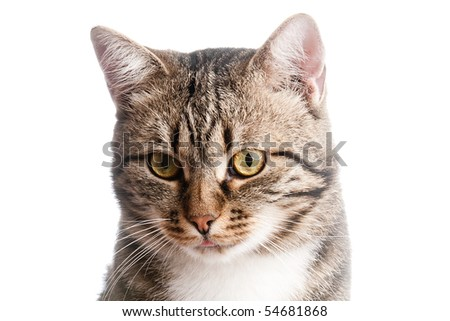 Close-up portrait of cat with tongue out - stock photo