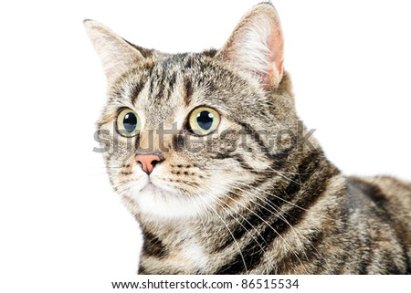 Close-up portrait of mixed breed cat isolated on white background - stock photo