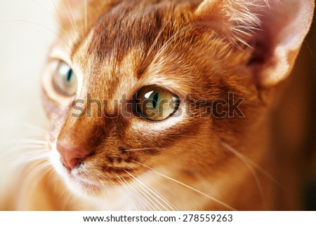 Close up portrait of small red cat - stock photo