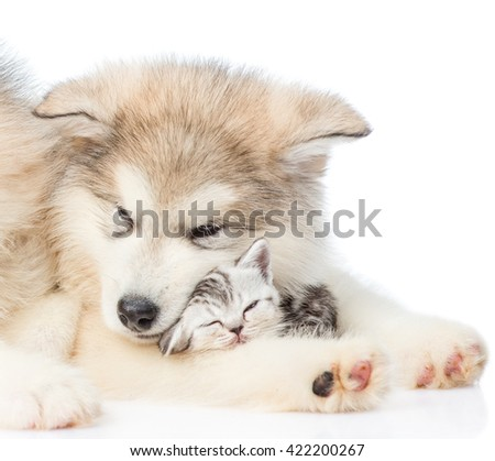 Close up puppy with sleepy kitten. isolated on white background - stock photo