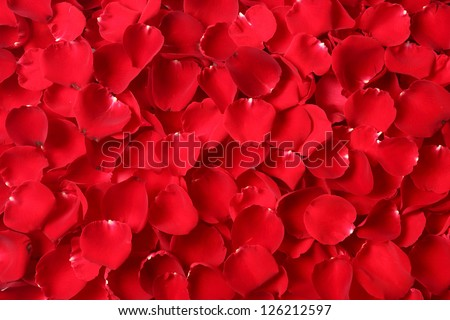 Close up red rose petal background - stock photo