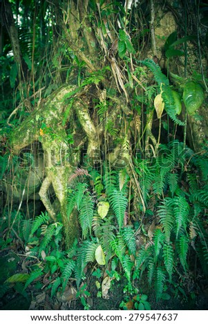 Close-up roots and green plant life in tropical rainforest - stock photo