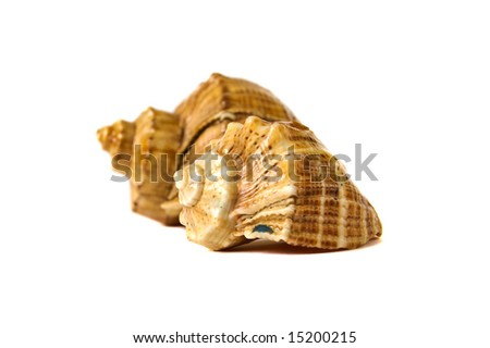 close-up sea shells isolated on white - stock photo