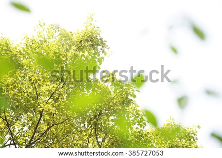 Close-up selective focus of tree leaves. - stock photo