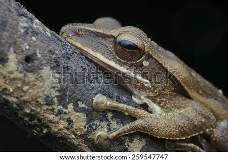 Close-up shot of a frog on a tree branch - stock photo