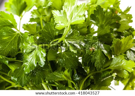 close up shot of a heap of vibrant green parsley - stock photo
