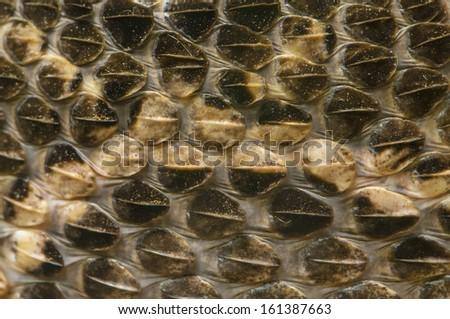Close-up shot of a Snake Skin  - stock photo