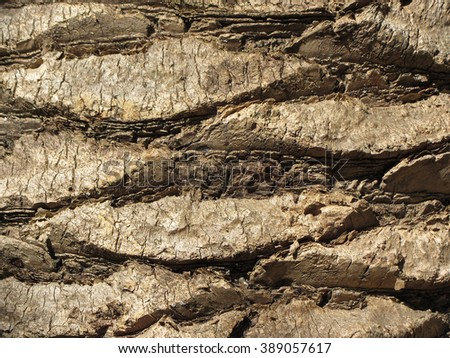 Close-up shot of a texture of a bark of a palm tree. - stock photo