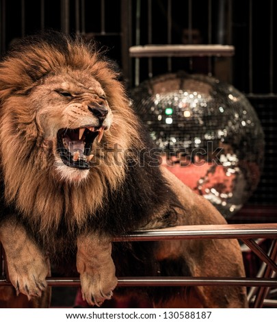 Close-up shot of  gorgeous roaring lion in circus arena - stock photo