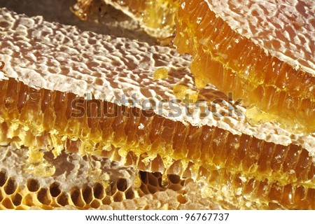 close up shot of honeycomb - stock photo