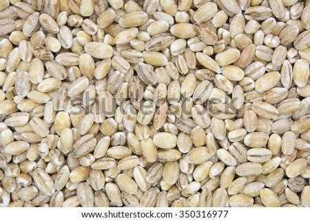 close up shot of pearl barley grain background - stock photo