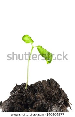 Close-up shot of plant and soil against white background. - stock photo