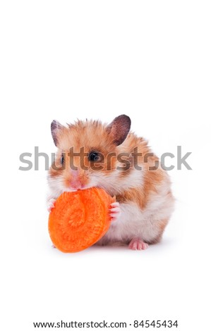 close up shot of red hamster on white background - stock photo