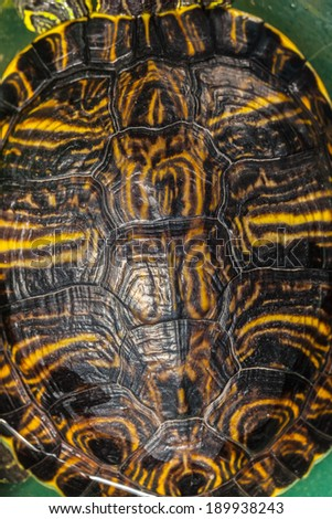 close up shot of small tortoise brown shell - stock photo