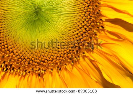 Close up shot of Sun flower seeds background - stock photo