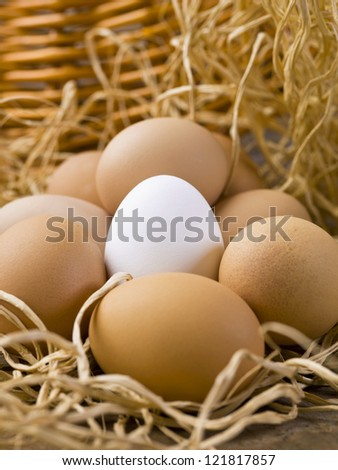 Close-up shot of white egg in between of brown eggs. - stock photo