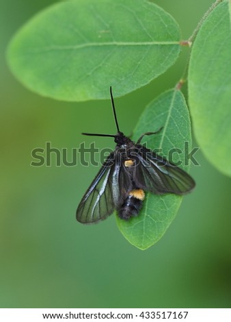 close up small garden insect perched on small green leaf. - stock photo