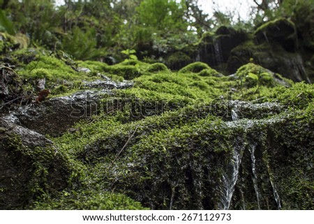 Close Up Spring Water on Mossy Rock - stock photo