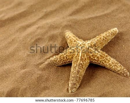 Close up starfish on sand - stock photo