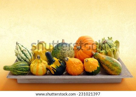 Close up studio shot of small miniature pumpkin Variety on wooden tray against orange background. - stock photo
