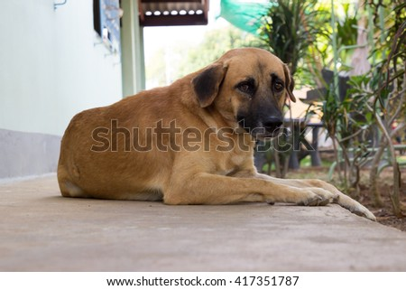 Close up Thai dog relax on the ground - stock photo