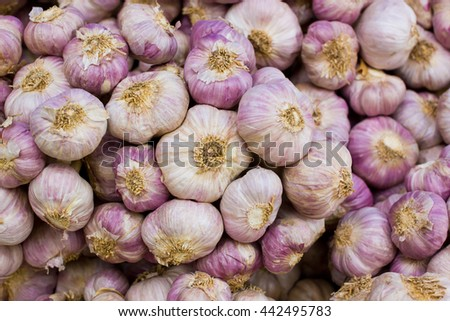 Close-up thai garlic bulbs and garlic cloves on top view.CR2 - stock photo