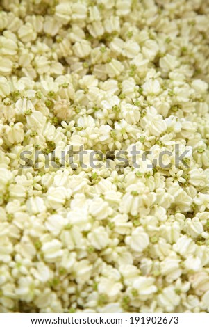 close up thai white flower in market - stock photo