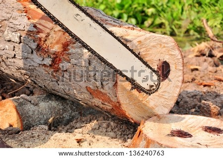 close up the man working to cut and move rubber tree after cut down.In Thailand - stock photo