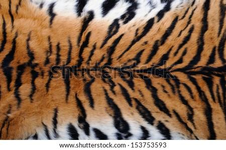close up tiger skin texture - stock photo