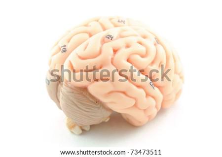 close up to human brain anatomy - stock photo
