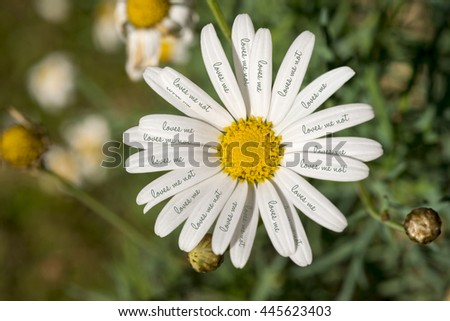 Close up top view of wild daisy flower with loves me not text on petals, concept nature shot. - stock photo