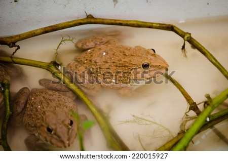 close-up Tropical Frog - stock photo