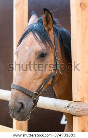 Close up view of a brown horse on a stable. - stock photo