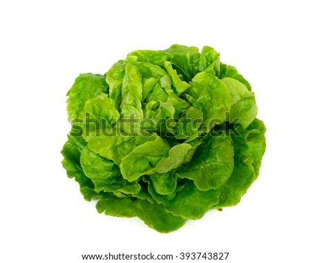 Close-up view of a freshly picked organic home growth fresh green Iceberg lettuce isolated on white background. Food concept. - stock photo