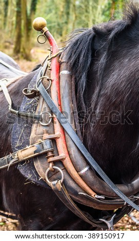 Close up view of a horse collar - stock photo