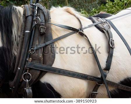 Close up view of a horse collar and harness - stock photo