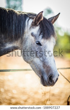 Close-up view of a white horse head - stock photo