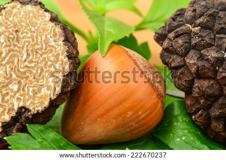 Close up view of black truffle intersection,  hazelnut and some green aromatic plants - stock photo