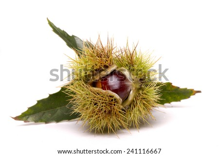 Close up view of chestnuts isolated on a white background. - stock photo