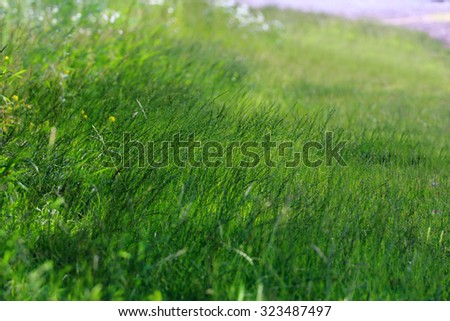 Close up view of fresh green grass at sunny summer day. Shallow dof - stock photo
