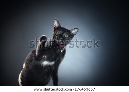 Close up view of nice black cat on blue back - stock photo