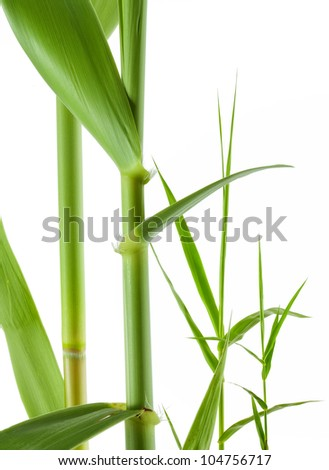 close up view of nice fresh leaf on white  back - stock photo
