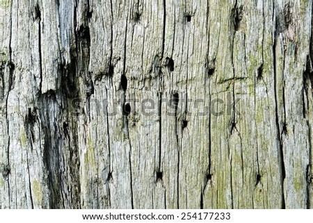 Close-up View of Old Weathered Wood Planks - stock photo