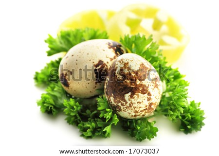 Close up view of the quail, eggs best idea for eggs and mayonnaise advertising - stock photo