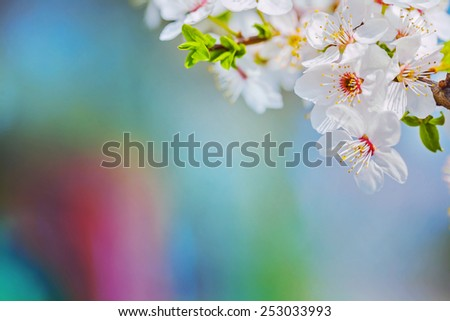close up view on branch of blossoming cherry tree on very blurred background with copyspace instagram  stile  - stock photo