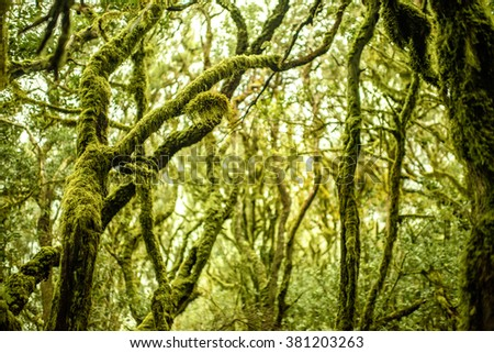 Close-up view on evergreen forest in Garajonay national park on La Gomera island in Spain - stock photo