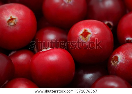 Close-up view on pile of ripe cranberry - stock photo