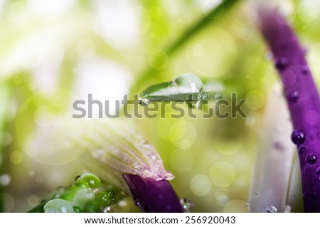 close up water drops on green grass and spring flowers, natural background - stock photo