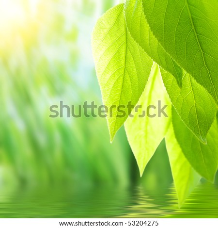 close up wet green grass after rain against white background - stock photo